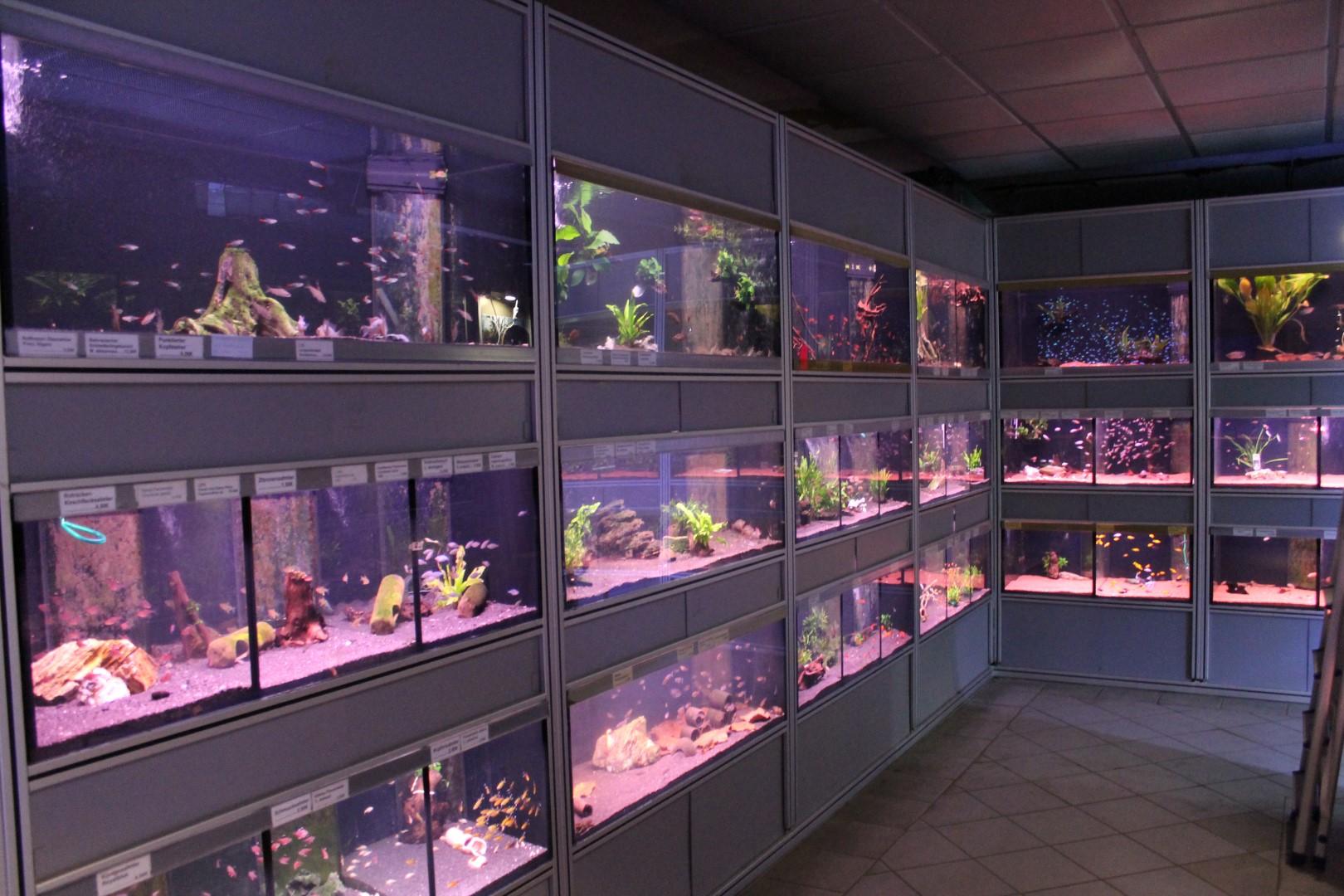 aquaristik das aquarium. Black Bedroom Furniture Sets. Home Design Ideas