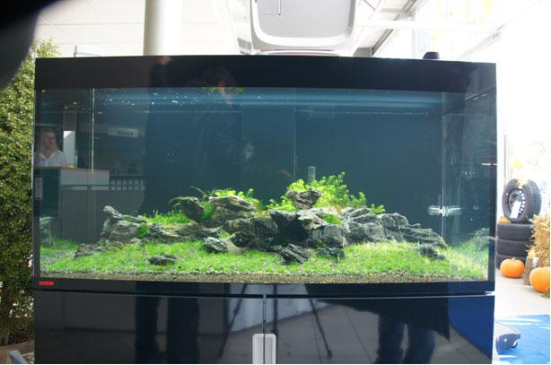 das aquarium - Aquascaping