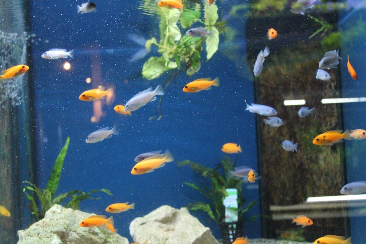 Das aquarium bildergalerie fische fischbecken for Aquarium fische im teich