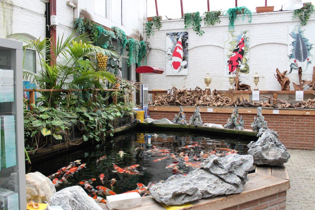 Das aquarium bildergalerie teich for Aquarium teich